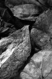ο Μαύρος φθινοπώρου αφήνει άσπρος Στοκ Εικόνα