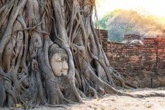 Ο μεγάλος Βούδας ενσωματώνει στο δέντρο της γωνίας φωτός του ήλιου Στοκ εικόνες με δικαίωμα ελεύθερης χρήσης