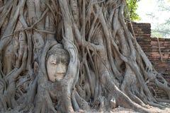 Ο μεγάλος Βούδας ενσωματώνει στο δέντρο Στοκ φωτογραφίες με δικαίωμα ελεύθερης χρήσης