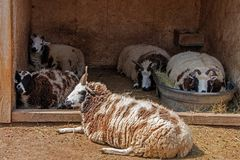 Ο μεγάλος ζωολογικός κήπος πεδιάδων τα σιού φθινόπωρα, νότια Ντακότα είναι οικογένεια FR στοκ εικόνα