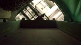 Ο μεγάλος σωρός των κώνων πεύκων χύνεται από το εμπορευματοκιβώτιο στο ειδικό διαμέρισμα απόθεμα βίντεο