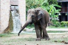 Ο μεγάλος ελέφαντας Στοκ φωτογραφίες με δικαίωμα ελεύθερης χρήσης