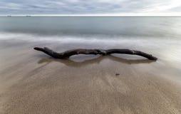 Ο μεγάλος κλώνος στο νερό στη θάλασσα της Βαλτικής ακτών Στοκ Εικόνες