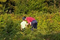 Ο μεγάλος-μπαμπάς με ένα εγγόνι συλλέγει ένα σμέουρο Στοκ Φωτογραφία