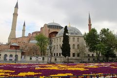 Ο μεγαλύτερος τάπητας των τουλιπών ο κόσμος σε Sultanahmet, Κωνσταντινούπολη Στοκ εικόνα με δικαίωμα ελεύθερης χρήσης