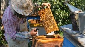 Ο μελισσοκόμος βγάζει ένα πλαίσιο του μελιού από την κυψέλη απόθεμα βίντεο
