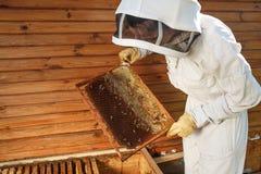 Ο μελισσοκόμος βγάζει από την κυψέλη ένα ξύλινο πλαίσιο με την κηρήθρα Συλλέξτε το μέλι Έννοια μελισσοκομίας στοκ εικόνες με δικαίωμα ελεύθερης χρήσης