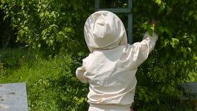 Ο μελισσοκόμος εξετάζει τον εμβολιασμό ενός σμήνου των μελισσών Ένας μελισσοκόμος σε ένα αυστραλιανό κοστούμι φιλμ μικρού μήκους