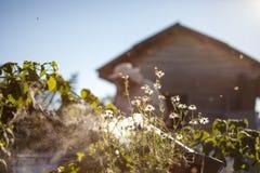 Ο μελισσοκόμος εργάζεται με τις μέλισσες και τις κυψέλες στο μελισσουργείο Στοκ εικόνα με δικαίωμα ελεύθερης χρήσης