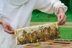 Ο μελισσοκόμος κρατά ένα κύτταρο μελιού με τις μέλισσες στα χέρια του Μελισσοκομία aphrodisiac Στοκ Εικόνα
