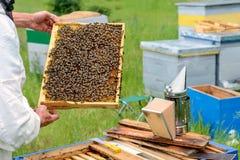 Ο μελισσοκόμος κρατά ένα κύτταρο μελιού με τις μέλισσες στα χέρια του Μελισσοκομία aphrodisiac Στοκ φωτογραφία με δικαίωμα ελεύθερης χρήσης