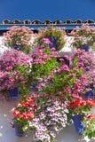 Ο μεσογειακοί τοίχος και το παράθυρο διακόσμησαν τα ζωηρόχρωμα λουλούδια, Cordo Στοκ Εικόνες