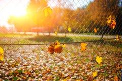 Ο μεταλλικός καθαρός-διαμορφωμένος φράκτης από το καλώδιο με το φύλλο φθινοπώρου σε το σε ένα υπόβαθρο της πόλης θαμπάδων στοκ εικόνες
