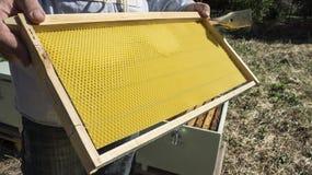 Ο μελισσοκόμος έχει τον έλεγχο μια νέα κηρήθρα Στοκ εικόνες με δικαίωμα ελεύθερης χρήσης