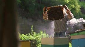Ο μελισσοκόμος βγάζει ήπια την κηρήθρα από την κυψέλη και εξετάζει την απόθεμα βίντεο