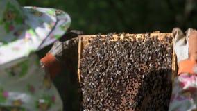 Ο μελισσοκόμος βγάζει ήπια την κηρήθρα από την κυψέλη και εξετάζει την Προσέχει το κύτταρο μελιού για την παρουσία απόθεμα βίντεο