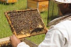 Ο μελισσοκόμος επιθεωρεί την οικογένεια μελισσών Μέλισσες κυττάρων Στοκ Φωτογραφία