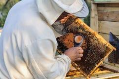 Ο μελισσοκόμος εργάζεται με τις μέλισσες και τις κυψέλες στο μελισσουργείο Στοκ Εικόνες
