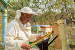 Ο μελισσοκόμος εργάζεται με τις μέλισσες και τις κυψέλες στο μελισσουργείο Στοκ εικόνες με δικαίωμα ελεύθερης χρήσης