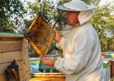 Ο μελισσοκόμος εργάζεται με τις μέλισσες και τις κυψέλες στο μελισσουργείο Στοκ Εικόνα