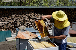 Ο μελισσοκόμος εργάζεται με τις μέλισσες και τις κυψέλες στο μελισσουργείο Μελισσοκόμος στο μελισσουργείο Στοκ Φωτογραφία