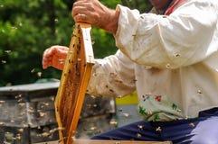 Ο μελισσοκόμος εργάζεται με τις μέλισσες στο μελισσουργείο Στοκ Φωτογραφίες