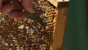 Ο μελισσοκόμος κόβει τα κύτταρα μελιού Το μέλι κυματίζει στις κηρήθρες Μακροεντολή κίνηση αργή απόθεμα βίντεο