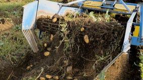 Ο μηχανισμός της συγκομιδής πατατών στην εργασία καθαρισμός φθινοπώρου των πατατών Οι αγρότες συγκομίζουν τη συγκομιδή Στοκ Εικόνες