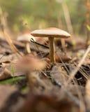 Ο μη φαγώσιμος μύκητας αυξάνεται στα ξύλα υπαίθρια στοκ φωτογραφίες με δικαίωμα ελεύθερης χρήσης