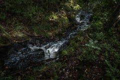 Ο μικρός δασικός ποταμός Στοκ φωτογραφία με δικαίωμα ελεύθερης χρήσης