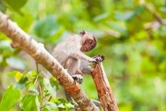 Μικρός πίθηκος Στοκ φωτογραφίες με δικαίωμα ελεύθερης χρήσης