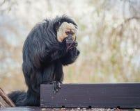 Ο μικρός πίθηκος τρώει στο ζωολογικό κήπο Στοκ εικόνες με δικαίωμα ελεύθερης χρήσης