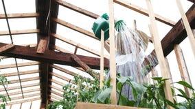 Ο μοντέρνος ευτυχής αγρότης στο καπέλο αχύρου και το φόρεμα χύνει τις συγκομιδές ποτίσματος σε μια κινηματογράφηση σε πρώτο πλάνο απόθεμα βίντεο