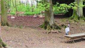 Ο μπλε γερανός και τα deers φιλμ μικρού μήκους