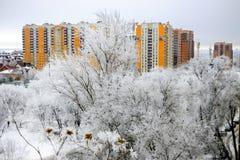 ο μπλε παγετός σκοτεινής μέρας κλάδων βρίσκεται χειμώνας δέντρων χιονιού ουρανού Φωτεινό κίτρινο κτήριο ενάντια στο άσπρο χιόνι Στοκ εικόνα με δικαίωμα ελεύθερης χρήσης