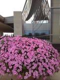 Ο Μπους λουλουδιών στοκ εικόνες με δικαίωμα ελεύθερης χρήσης