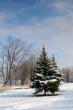 ο μπλε παγετός σκοτεινής μέρας κλάδων βρίσκεται χειμώνας δέντρων χιονιού ουρανού Στοκ Φωτογραφία
