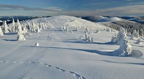 ο μπλε παγετός σκοτεινής μέρας κλάδων βρίσκεται χειμώνας δέντρων χιονιού ουρανού Στοκ φωτογραφία με δικαίωμα ελεύθερης χρήσης