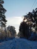 ο μπλε παγετός σκοτεινής μέρας κλάδων βρίσκεται χειμώνας δέντρων χιονιού ουρανού Στοκ Εικόνες