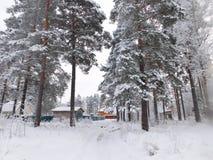 ο μπλε παγετός σκοτεινής μέρας κλάδων βρίσκεται χειμώνας δέντρων χιονιού ουρανού Στοκ Φωτογραφίες