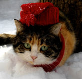 ο μπλε παγετός σκοτεινής μέρας κλάδων βρίσκεται χειμώνας δέντρων χιονιού ουρανού Γάτα στην κόκκινη ΚΑΠ Στοκ Εικόνες