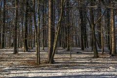 ο μπλε παγετός σκοτεινής μέρας κλάδων βρίσκεται χειμώνας δέντρων χιονιού ουρανού Στοκ Εικόνα