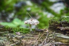 ο μύκητας στο δέντρο Στοκ Εικόνα