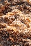 ο μύλος είδε τα απόβλητα Στοκ Φωτογραφίες
