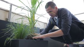 Ο νέος καλλιεργητής ελευθερώνει τις πράσινες εγκαταστάσεις από το δοχείο και υποβάλλει το κιβώτιο στο θερμοκήπιο απόθεμα βίντεο