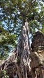 Ο ναός Khan Preah, Angkor, Siem συγκεντρώνει Στοκ εικόνες με δικαίωμα ελεύθερης χρήσης