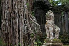 Ο ναός Siem ζουγκλών συγκεντρώνει, Angkor Wat, Καμπότζη Στοκ Εικόνες