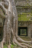 Ο ναός Siem TA Prohm συγκεντρώνει, Angkor Wat, Καμπότζη Στοκ φωτογραφία με δικαίωμα ελεύθερης χρήσης