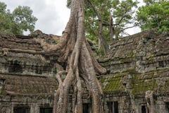 Ο ναός Siem TA Prohm συγκεντρώνει, Angkor Wat, Καμπότζη Στοκ Εικόνες
