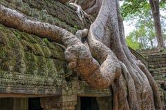 Ο ναός Siem TA Prohm συγκεντρώνει, Angkor Wat, Καμπότζη Στοκ Φωτογραφίες